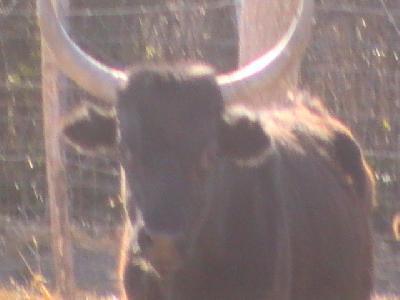 Villa dans prairie 7 hectares avec toros, chevaux