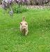 Photo petite annonce Garde de votre petit chien
