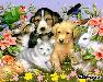 Photo petite annonce Je garde vos animaux a mon domicile sur Armentières