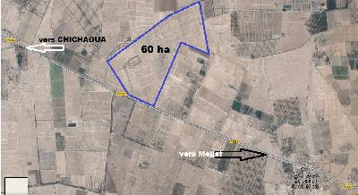 Vente ferme 60 ha à  Mejjat Chichaoua Marrakech