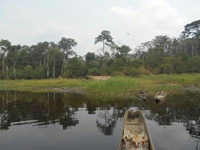 300 hectares de Terrain agricole à louer à Mengang / Cameroun