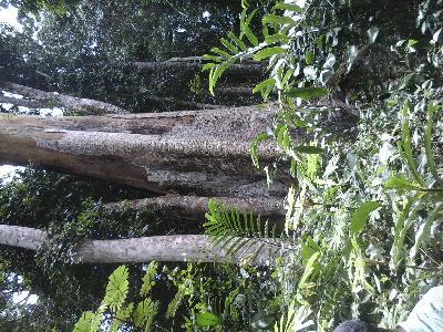 500 hectares de Terrain agricole à louer à Mengang / Cameroun