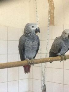 Petite annonce Oiseaux - photo no. 2