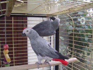Petite annonce Oiseaux - photo no. 1