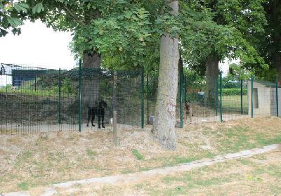 Petite annonce Garde d'animaux - photo no. 1